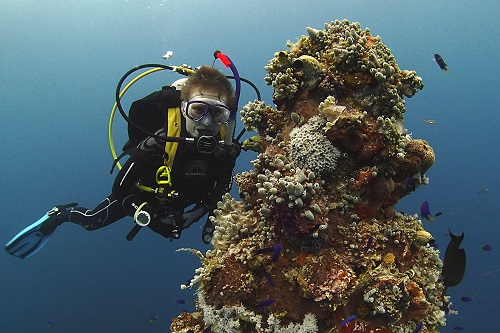 Maddy diving around coral on Kensho Maru, Truk Lagoon