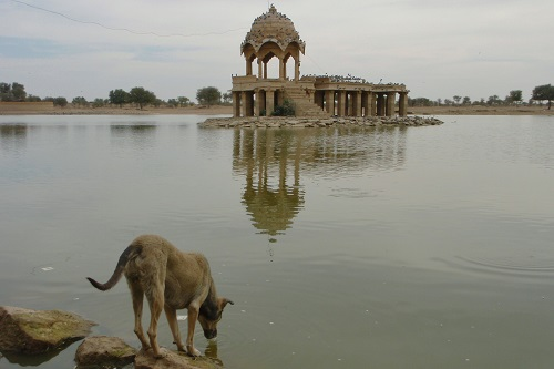 Dog drinking from reservoir in Jaisalmer, India