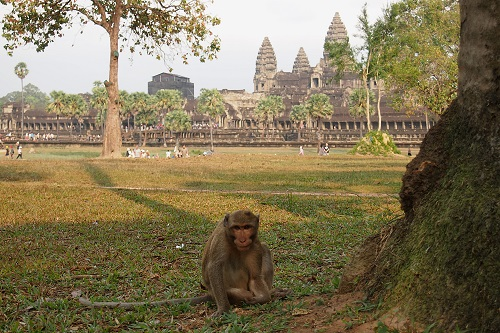 Monkey infront of Angkor Wat temple near Siem Reap, Cambodia