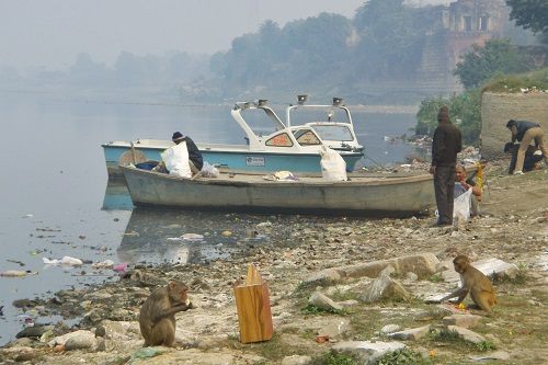 Monkeys by litter filled Yamuna River in Agra, India