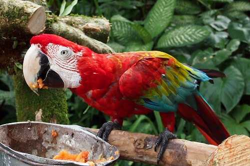 Parrot on a perch at the Blanco Museum in Ubud, Bali