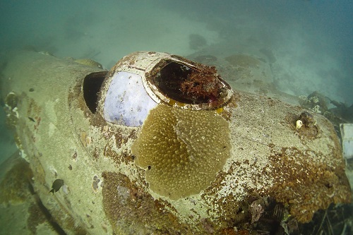 Broken coral encrusted gun turret on the Betty Bomber aeroplane in Chuuk Lagoon, Micronesia