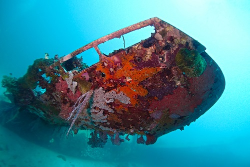 Colourful coral covered wing of the Betty Bomber in Chuuk Lagoon, Micronesia