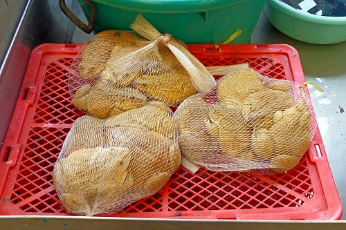 Frogs in net bags at Khlong Toei Market in Bangkok, Thailand