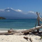 Driftwood on Menjangan Island beach in Bali, Indonesia