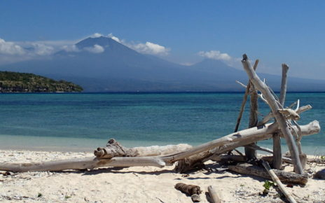 Driftwood on Menjangan Island beach in Bali, Indonesia