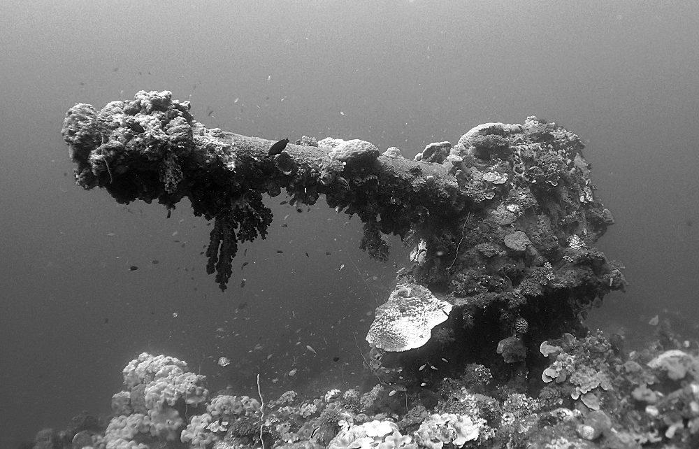 Coral encrusted bow gun on Fujikawa Maru wreck in Chuuk Lagoon, Micronesia