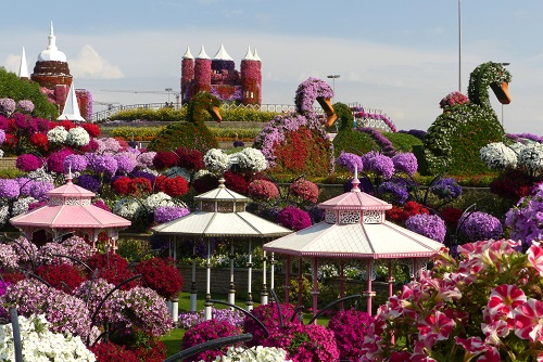 Pagodas, flower swans and petunias at Dubai Miracle Garden, UAE
