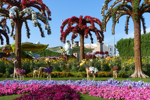 Herd of giraffes and flower trees at Dubai Miracle Garden, UAE