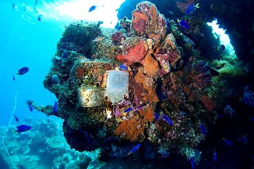 Coral encrusted gun and plaque on the Fujikawa Maru wreck in Chuuk Lagoon, Micronesia