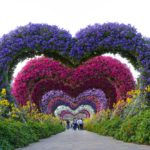 Flowers forming a tunnel of hearts at Dubai Miracle Garden in UAE