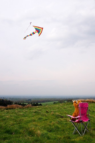 Teddy bear flying a kite at Lyme Park, Peak District