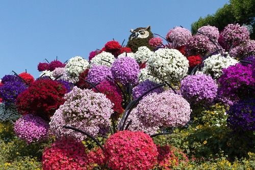 Flower owl and baskets of petunias at Dubai Miracle Garden, UAE