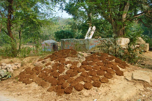 Dung pancakes drying in sun in Agra, India