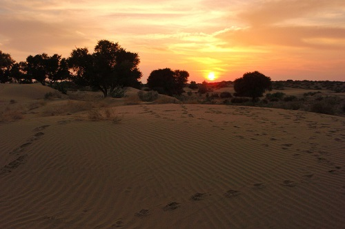 Sunset over the sand dunes in the Thar Desert near Jaisalmer, India