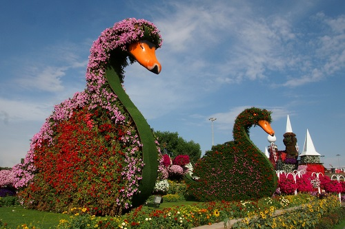 Avenue of Flower Swans at Dubai Miracle Garden, UAE