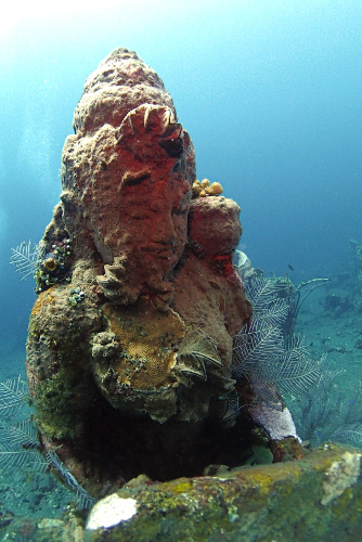 Clam covered statue at an underwater temple in Tulamben, Bali