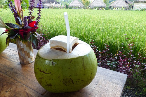 Green coconut drink with view over rice field at Campuhan in Ubud, Bali