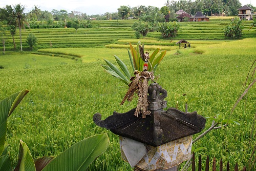 Shrine at Campuhan rice terrace in Ubud, Bali