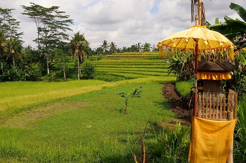 Shrine and rice terrace at Campuhan in Ubud, Bali