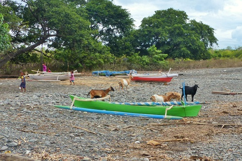 Goats and boats on Bontoh Village beach on Sangeang Island in Indonesia