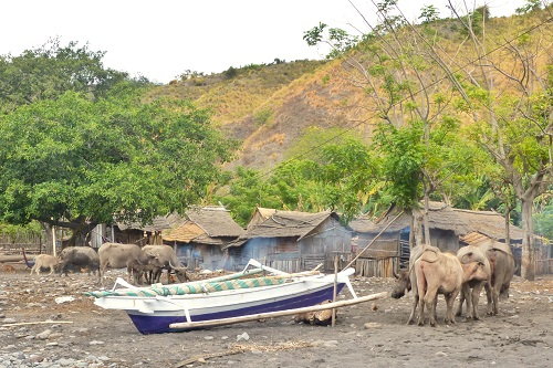 Water buffalo and a boat on Bontoh Village beach on Sangeang Island in Indonesia