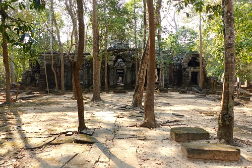 Trees in front of Ta Nei temple near Siem Reap, Cambodia