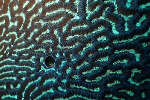 Close up detail of hard coral seen diving in Similan Islands, Thailand