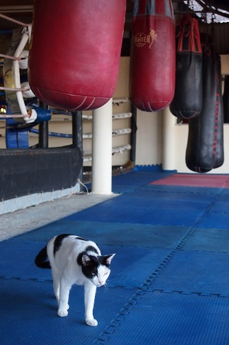 Cat and heavy bags at KYN Muay Thai camp in Koh Yao Noi, Thailand
