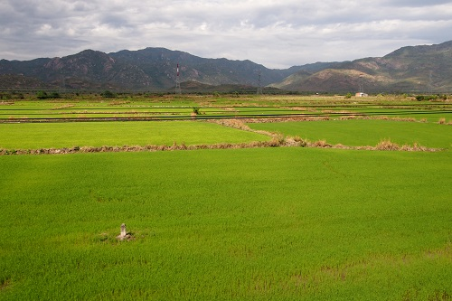 Rice paddies seen from the train in Vietnam