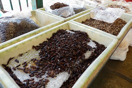 Trays of bugs for sale at Khlong Toei Market in Bangkok, Thailand